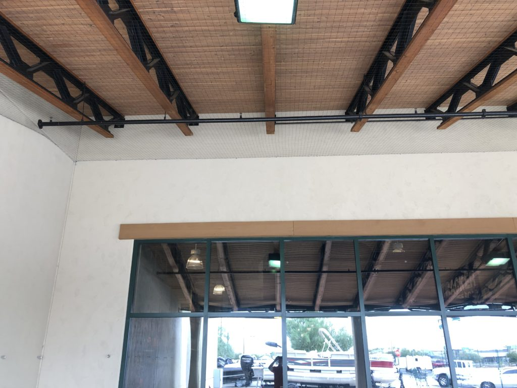 Pigeon netting installed at Cabelas in Glendale Arizona by the Pigeonpros professional technicians