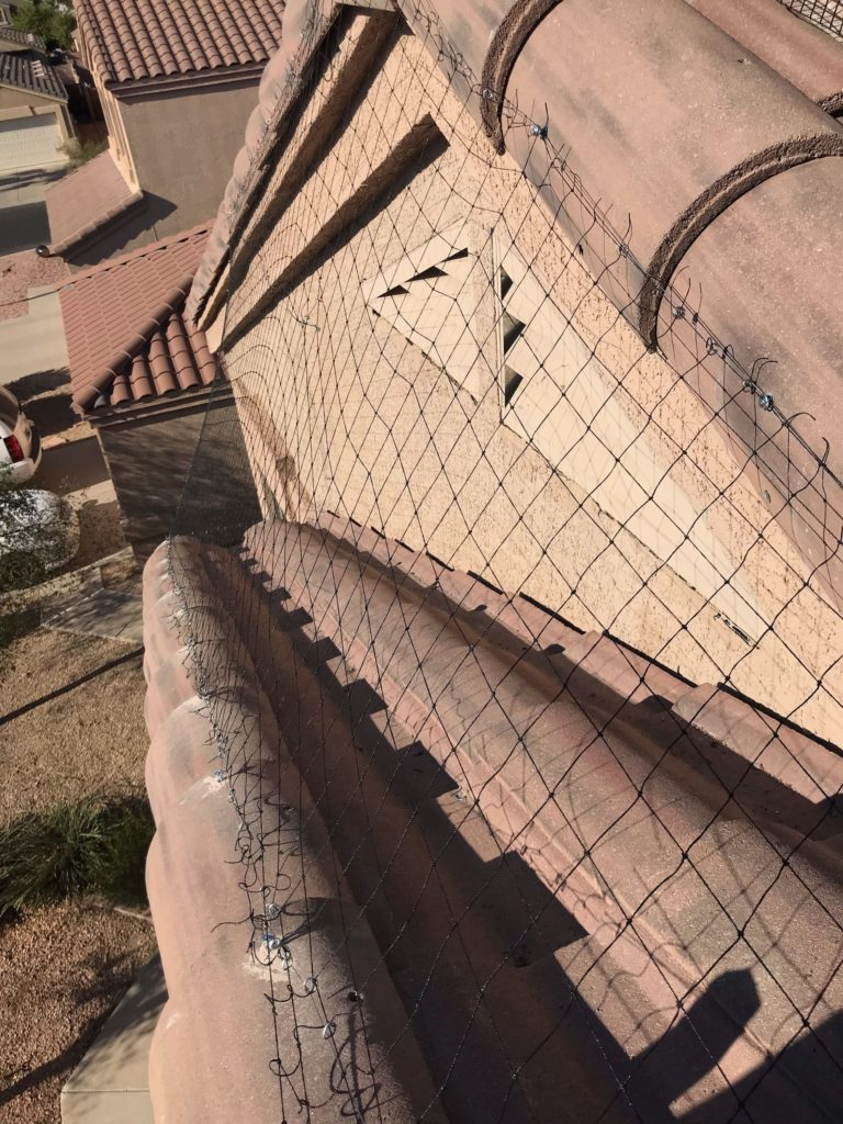 Pigeons love to sit on landings like this at residential homes in Arizona