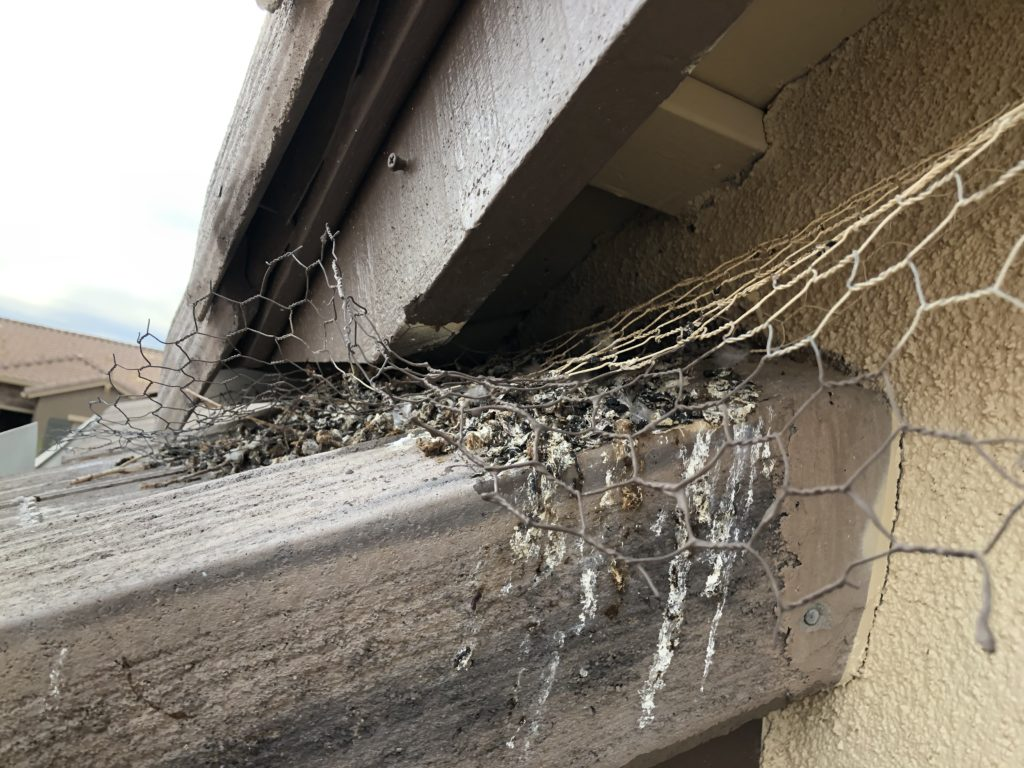 Pigeons pulled the chicken wire a homeowner put here out and continued nesting behind it.